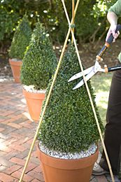 Maintaining a Simple Pyramid Shape Step 1: Form a teepee with three bamboo stakes tied together at the top with twine or a rubber band. Step 2: Using sharp hand pruners or shears , prune following the stake guide. Snip small amounts at a time, standing back frequently to check precision. Topiaries look great in multiples.