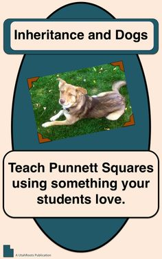 A complete teaching resource for Punnett Squares, including a fully illustrated independent reading, task cards, and step-by-step teaching guide. I only pinned this thought because this really looks like my dog Zoe! 8th Grade Science, Science Curriculum, Science Resources, Middle School Science, Science Education, Science Activities, Biology Lessons, Science Lessons, Life Science