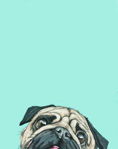 Imagen de dog, wallpaper, and pug