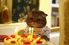 バースデーを迎えた猫様がバースデーケーキにうっとりしている様子 | A!@attrip