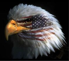 Our great Eagle