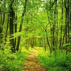 Loving the green scenery. Forest Path, Woodland Forest, Tree Forest, Spring Scene, Spring Day, Forest Quotes, Green Scenery, Spring Forest, Forest Photography