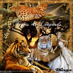 Tigers & Leopards!!!