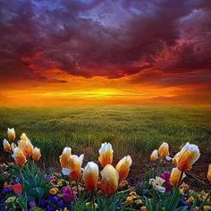 #Repost @edaccessible by Phil Koch @natgeophotos #sunset #sunrise #sun #TagsForLikes #TFLers #pretty #beautiful #red #orange #pink #sky #skyporn #cloudporn #nature #clouds #horizon #photooftheday #instagood #gorgeous #warm #view #night #morning #silhouette #instasky #all_sunsets #wisconsin