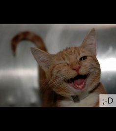 Ce chat pourrait représenter l'émoticône du clin d'oeil avec un large sourire
