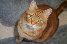 If your cat is approaching the golden years, there are signs to let you know once they're reaching the homestretch of those nine lives. Although we love our cats dearly, sadly they are like humans who don't live forever. Here …