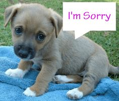 How to Say I'm Sorry: 5 Practical Tips! http://www.couplescounselingchicago.net/say-im-sorry-5-practical-tips/ #dating #relationships #marriage #puppies