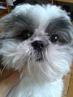 My sweet Fred!