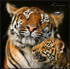 Mother Love by Monique Bogaerts, via 500px