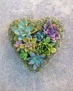 Hey, I found this really awesome Etsy listing at https://www.etsy.com/listing/225702229/succulent-heart-planter-valentines-day
