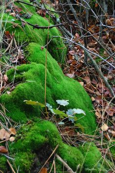 Stunning 'Moss' Artwork For Sale on Fine Art Prints Growing Moss, Growing Plants, Mousse, Forest Light, Moss Art, Moss Garden, Plant Therapy, Forest Garden, Forest Floor