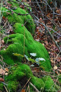 Moss Art ~
