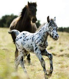 Dotty foal!!!