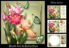 Blush Iris Butterflies on Craftsuprint designed by Anne Lever - This lovely mini kit makes an 8x8 square topper with extra plaque, decoupage, seven greetings, a blank greetings tile, two gift tag toppers and a matching insert. It features gorgeous pink and peach irises and butterflies. - Now available for download!