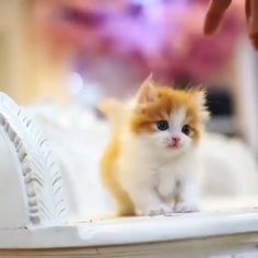 These kittens will completely melt your heart! 💕 Funny Cat Images Video Memes Quotes For Cat Lovers - Emilie Justus - These kittens will completely melt your heart! 💕 Funny Cat Images Video Memes Quotes For Cat Lovers - Kittens Cutest Baby, Cute Baby Cats, Cute Cats And Kittens, Cute Funny Animals, Cute Baby Animals, Baby Kitty, Kitty Cats, Animals Kissing, Orange Kittens