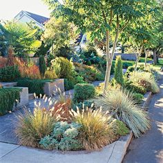 Front Yard Sidewalk-Garden Ideas: Add Easy Elegance- filling beds with low maintenance, easy-care plants, such as these ornamental grasses, including fountain grass (Pennisetum) and blue oat grass (Helictotrichon).   Here's a tip: Check your city's rules about planting in this space; some places have restrictions on how tall plants can grow.