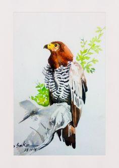 Kitebird watercolor