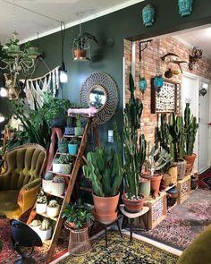 Cactus in 2