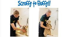 Back by popular demand... Scruffy to Fluffy!  Would you like us to wash your pooch? Our lovely canine carers will give your pooch a wash and towel dry!  Minimum donation £5 a pooch.  Saturday 15th April, 10am - 4pm  No appointment needed but please arrive early to avoid disappointment  *If we feel your pooch is too anxious or stressed we may refuse to bath them*