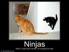 Sneak attack by kitten w/ superpowers! I Love Cats, Cute Cats, Funny Cats, Funny Animals, Cute Animals, Animal Funnies, Cat Fun, Animal Memes, Crazy Cat Lady