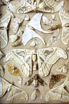 moths-I see real moths and then I question if others are textiles.  what do you think ?
