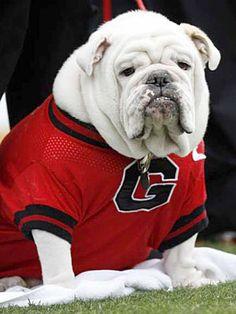 Uga VII, University of Georgia's former mascot.