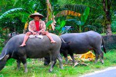 Mindanao, Philippines Davao, Makati, Cebu, Iloilo, Jose Rizal, Philippines Culture, Mindanao, Water Buffalo, Book Illustrations