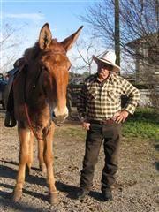 Sowhatchett Mule Farm, Inc. - Mules for Sale