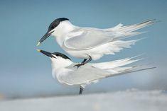 The Very Best of Bird Photography Toco Toucan, Beautiful Birds, Beautiful World, Happy Photos, Photography Awards, Vertebrates, Bird Pictures, Little Birds, Bird Species
