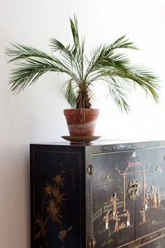 Plant and furniture