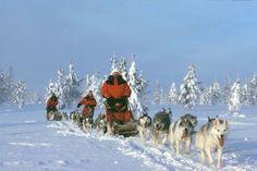 Husky safari in Finland... amazing! My kind of vacation :)