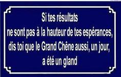 GRANDIS  AU COEUR DE LA GRANDE FORET DE LA VIE...