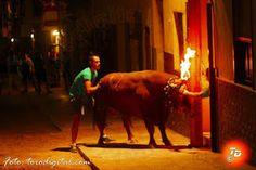torodigital: Toro de Núñez del Cuvillo para la embolada en San...