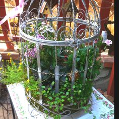New Ideas Bird Cage Garden Beautiful Unique Gardens, Beautiful Gardens, Dream Garden, Garden Art, Birdcage Planter, Birdcage Decor, Bonsai, Bird Cages, Garden Spaces