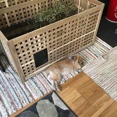 DIY Indoor Rabbit Hutch Using IKEA HOL Furniture ⋆ Travel & Lifestyle Blog   Sophia Bray