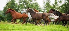 Risultati immagini per cavalli selvaggi americani