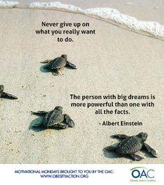 Turtle Quotes Beauteous Motivationalmondays #confucius #quotes #turtle  Words  Pinterest .