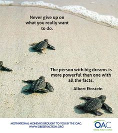 Never give up! #MotivationalMondays #motivation #quotes