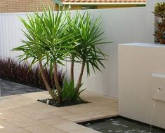 Front Yard Gardens Gallery Landscape Inspirations (S.) Pty Ltd Austral Tropical Landscaping, Landscaping With Rocks, Modern Landscaping, Front Yard Landscaping, Palm Trees Landscaping, Modern Landscape Design, Landscape Plans, Front Yard Design, Outdoor Gardens