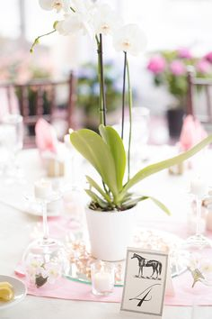 A historic Colonial Williamsburg wedding at St. George Tucker House and Ford's Colony Country Club with lush floral bouquets photographed by Katherine Sparks Photography. White Orchid Centerpiece, Orchid Centerpieces, Bridal Shower Centerpieces, Reception Decorations, Table Decorations, Lavender Wedding Theme, Floral Wedding, Card Table Wedding, Wedding Flower Inspiration