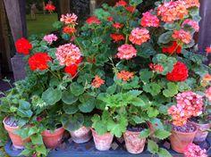 Garden Inspiration, Plants, Plant, Planets