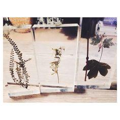 MMさんの、標本,フランス アンティーク,植物サンプル,antique,机,のお部屋写真