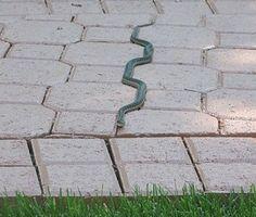 serpiente.jpg (475×403)