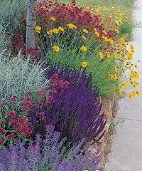 Note the Coreopsis, Salvia, Catmint, Jupiter's Beard, and (?) Artemesia.