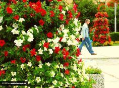 flower towers Terra