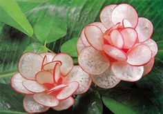 Red Radish Flower