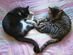 Kitty Love  (by jinny1a1 on Flickr)