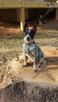 My little boy Brady he loves chewing on the stump!