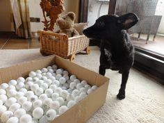 Hundespiel selber machen: Schnüffelkiste de Luxe, von Mydog