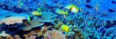 great barrier reef!!